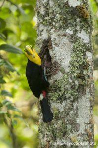 Los Bosques Protegidos de Ecuador definirán los Derechos de la Naturaleza